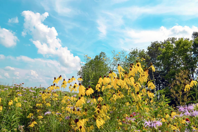 Local park. Flowers by a path in an a local Ohio park stock images