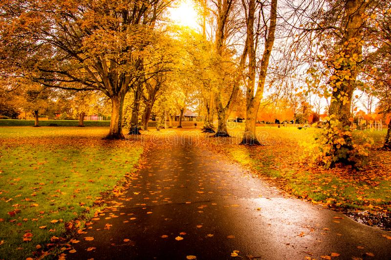 Local Park in Kilmarnock on Beautiful Autumn Day. With leaves on path royalty free stock image