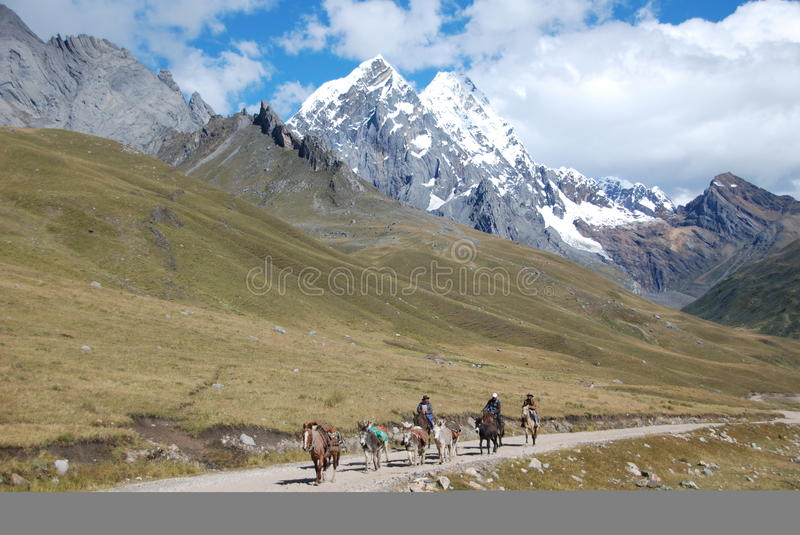 Local Peruvian horseman carrying goods in Peru royalty free stock photo