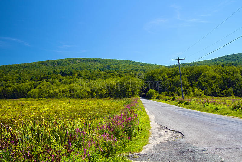 Download Local road stock image. Image of purple, lythrum, mountain - 16009371