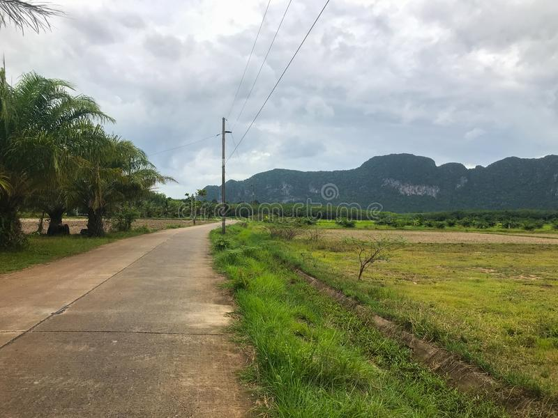 Road and rice field at Phatthalung, Thailand. Local road and rice field at Phatthalung, Thailand stock image