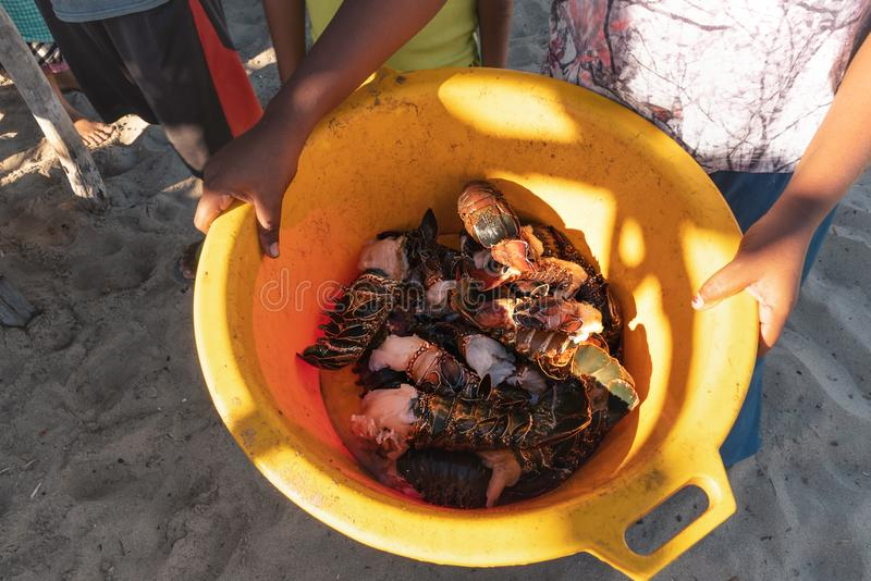 Local woman showing yellow plastic bowl with freshly caught crustacean seafood - crabs, langostino and lobster. Fishing is one of royalty free stock photos