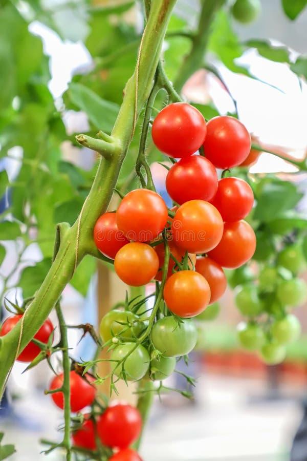 A localement produit les fruits et légumes organiques frais photographie stock libre de droits