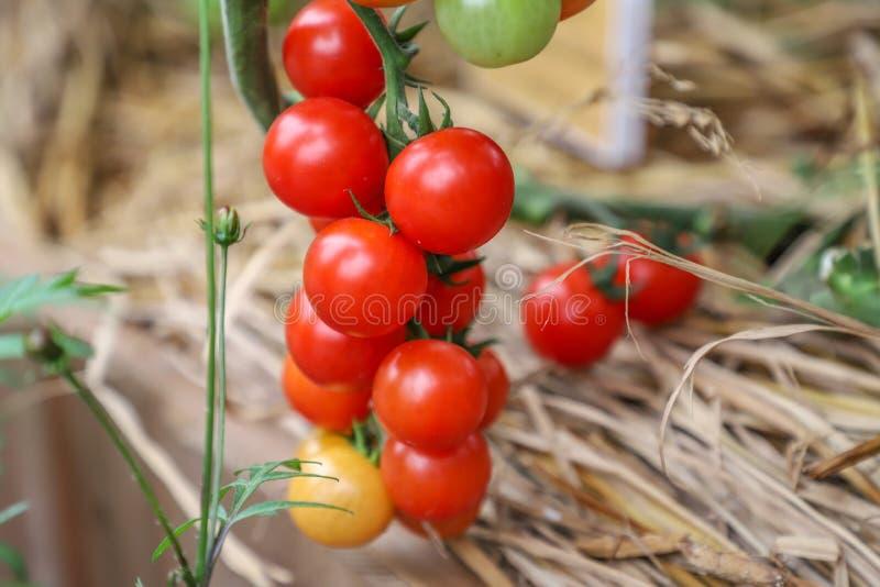 A localement produit les fruits et légumes organiques frais images stock