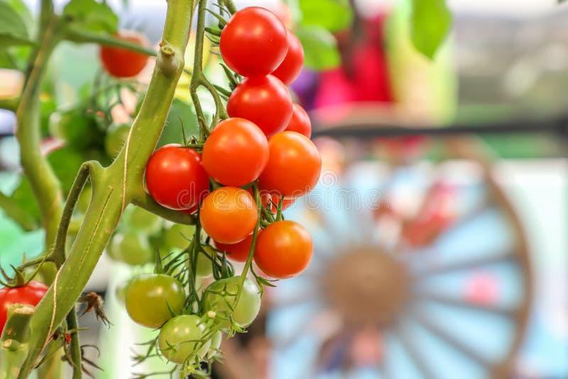 A localement produit les fruits et légumes organiques frais photographie stock