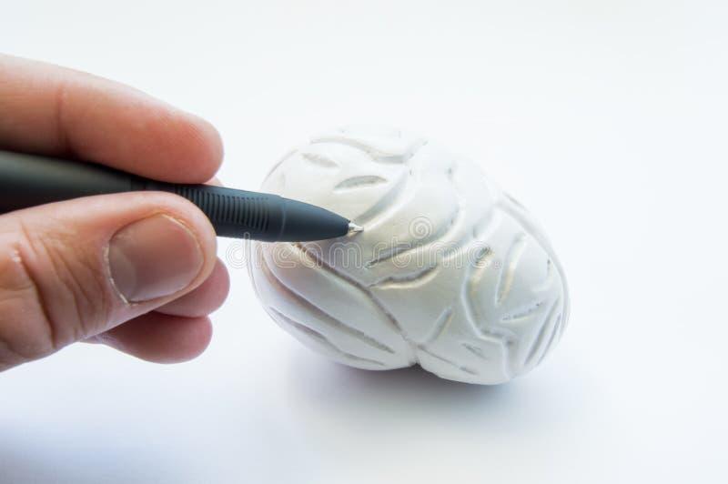 Localisatie van pathologie of problemen in hersenen of leerproces op school, medische hogeschool of Universiteit Arts of punten a stock afbeeldingen