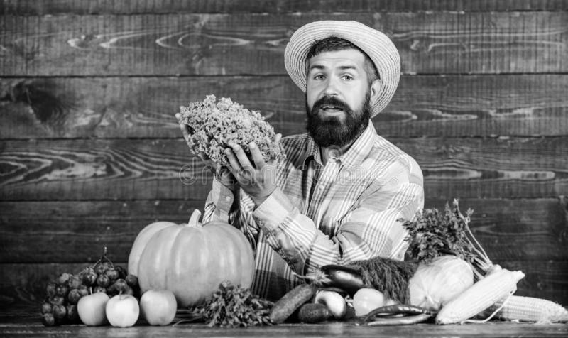 Locally grown crops concept. Buy vegetables local farm. Typical farmer guy. Farm market harvest festival. Man mature. Bearded farmer hold vegetables wooden royalty free stock photos
