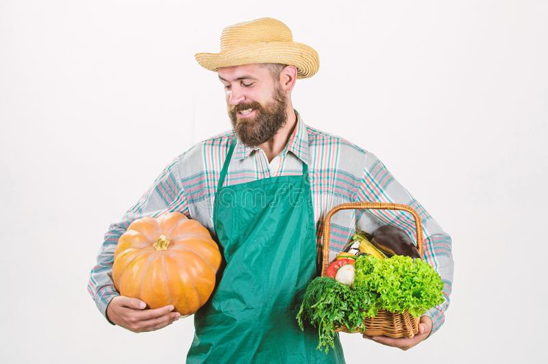 Locally grown foods. Local farm. Farmer lifestyle professional occupation. Farming and agriculture. Farmer wear apron. Hold pumpkin white background royalty free stock photo