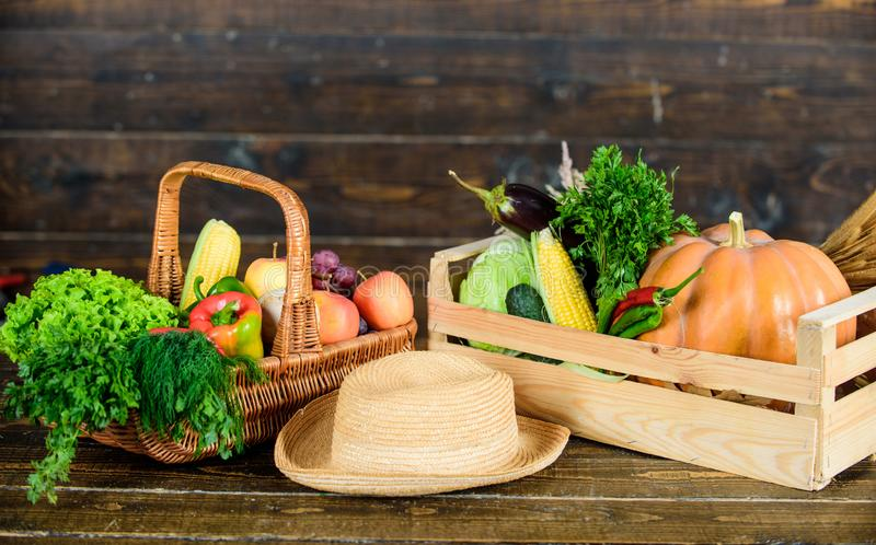 Locally grown natural food. Farmers market. Vibrant and colorful vegetables. Homegrown vegetables. Fresh organic. Vegetables wicker basket. Fall harvest concept royalty free stock images