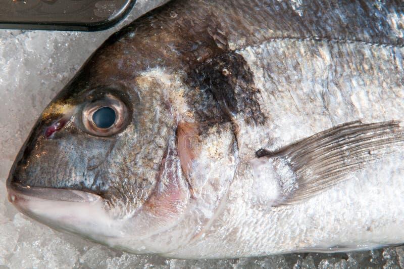 Localmente il pesce originario alla via fa, alto vicino del pesce immagini stock libere da diritti