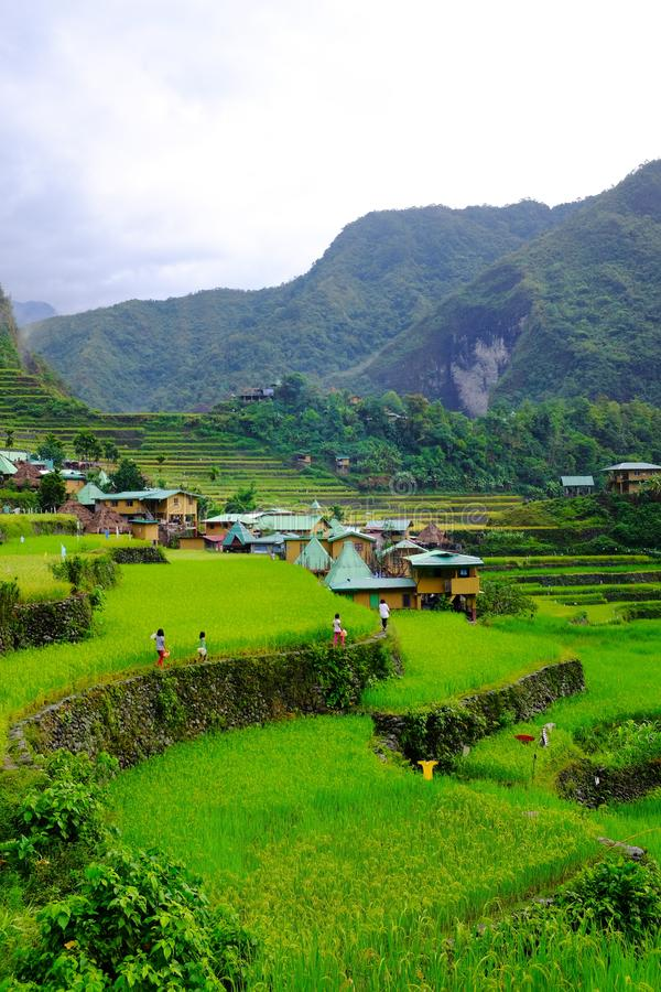Locals walking in the rice terraces of Batad in Banaue, Ifugao, Philippines stock photo