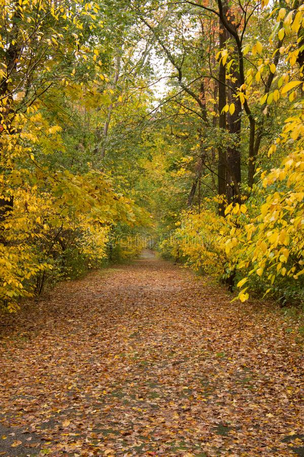 Fall in Bare Cove park royalty free stock photos