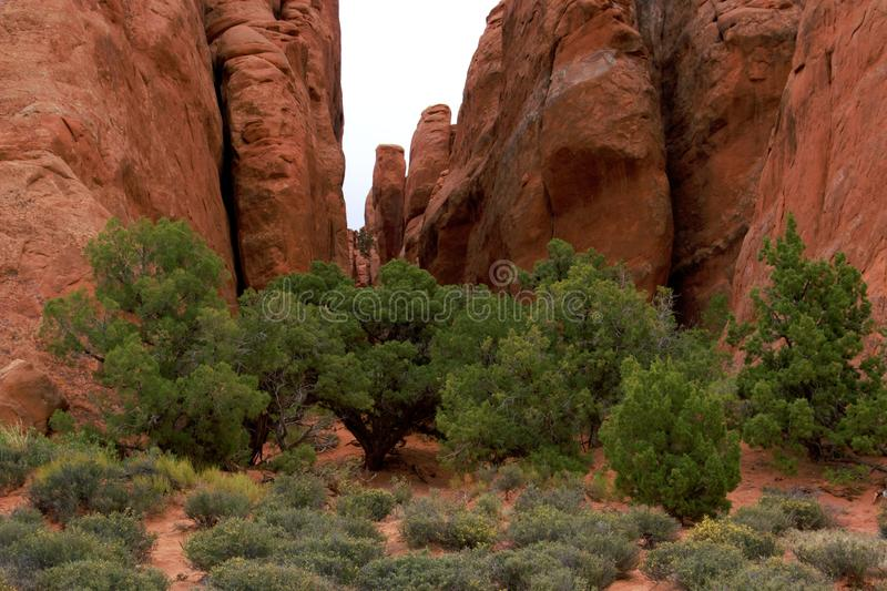 Arches landscape. Located just 5 miles 8 km north of Moab is Arches National Park, which contains the world`s largest concentration of natural sandstone arches royalty free stock photography