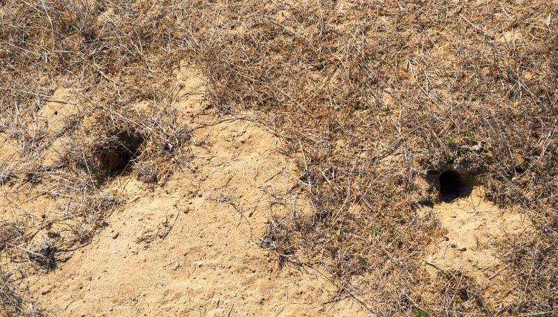 Loch eines unbekannten Tieres in der Steppe lizenzfreie stockfotografie