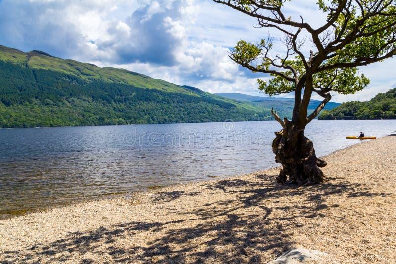 Loch Lomond Skottland fotografering för bildbyråer