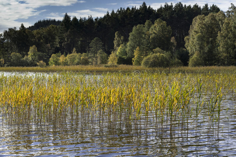 Loch Pityoulish in the Cairngorms National Park of Scotland. royalty free stock image