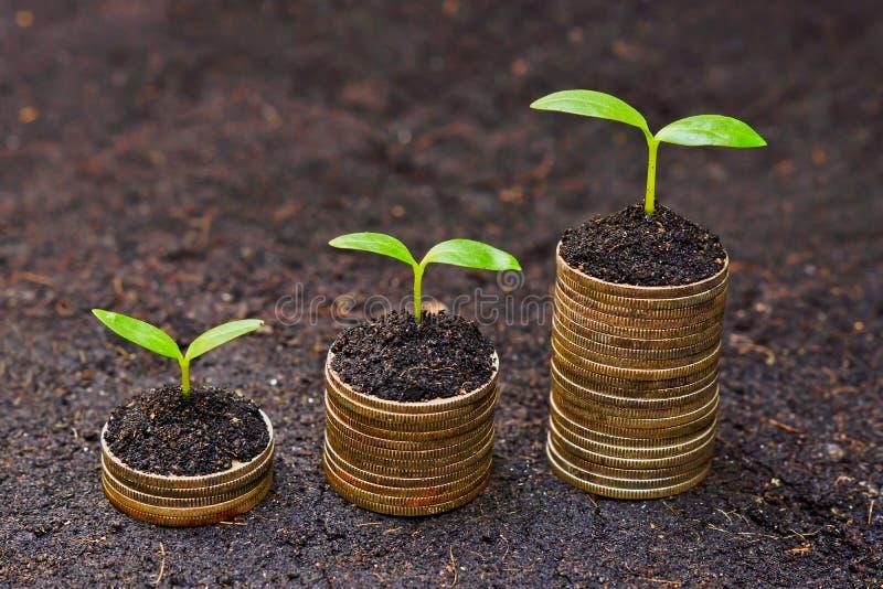 Lock som växer på mynt royaltyfri bild