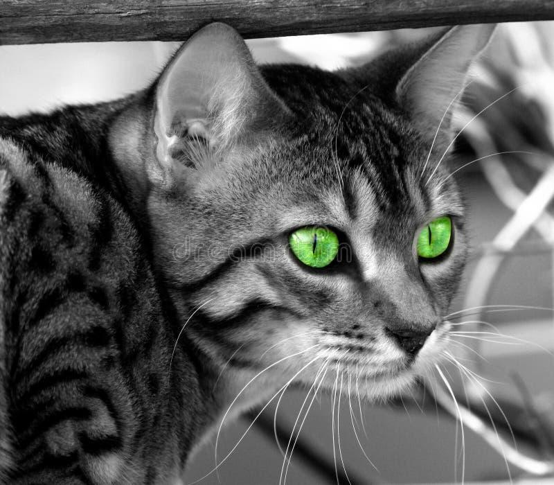 Download Locked цель стоковое фото. изображение насчитывающей коты - 91080