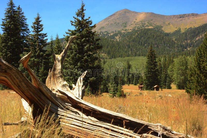Lockett Meadow, Flagstaff Arizona stock image