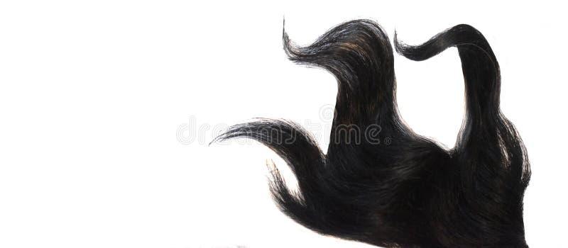 Lockig färgad hårtråd som isoleras på vit bakgrund arkivbilder