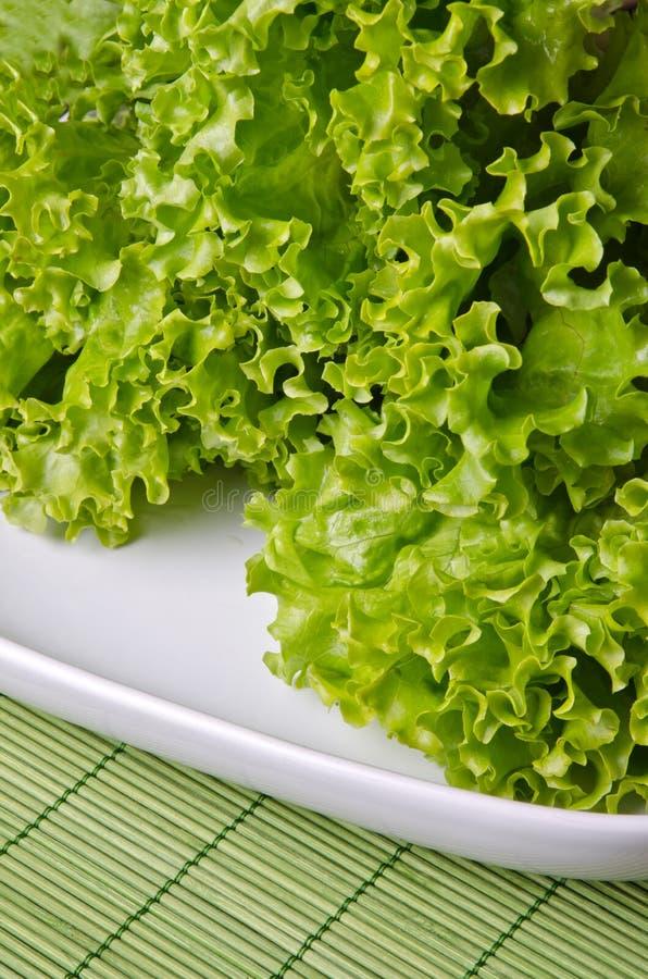 lockig grön sallad royaltyfria foton