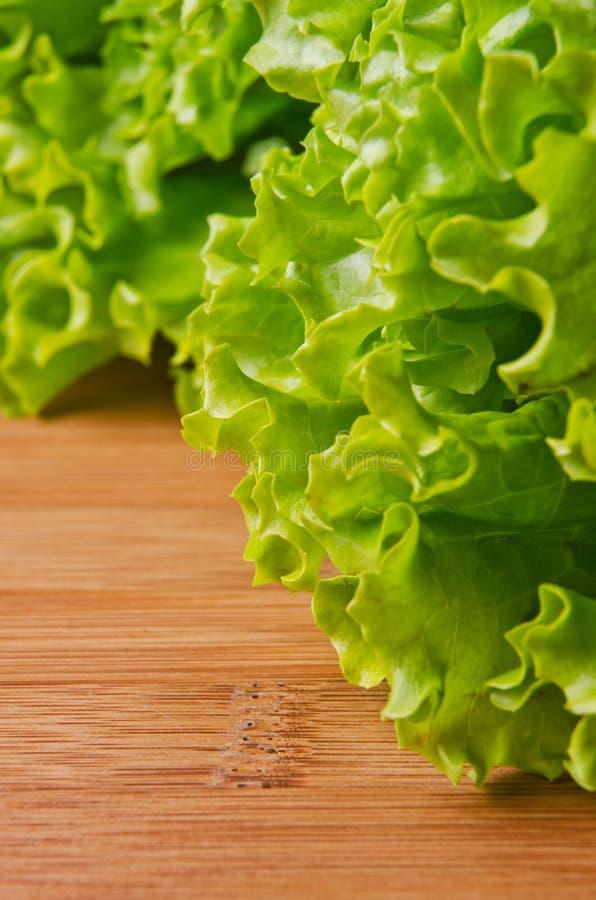 lockig grön sallad arkivfoton