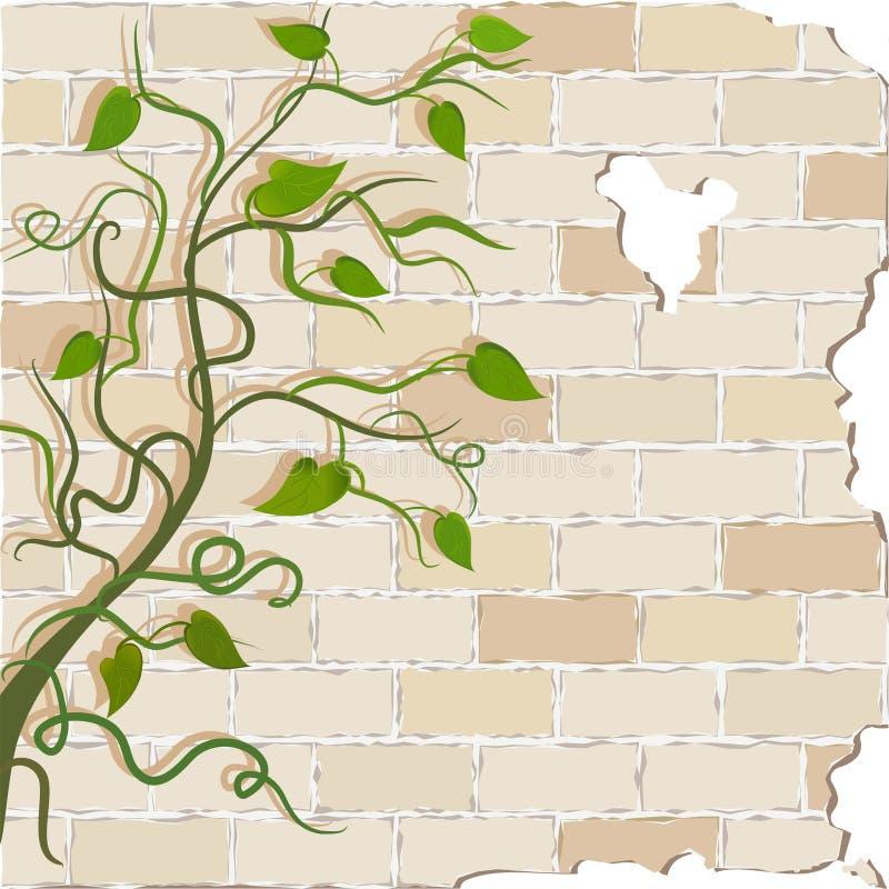 Lockiga vinrankor på en tegelstenvägg royaltyfri illustrationer