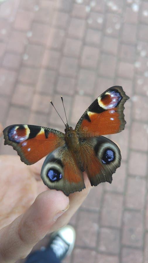 Locura de la mariposa imagen de archivo libre de regalías