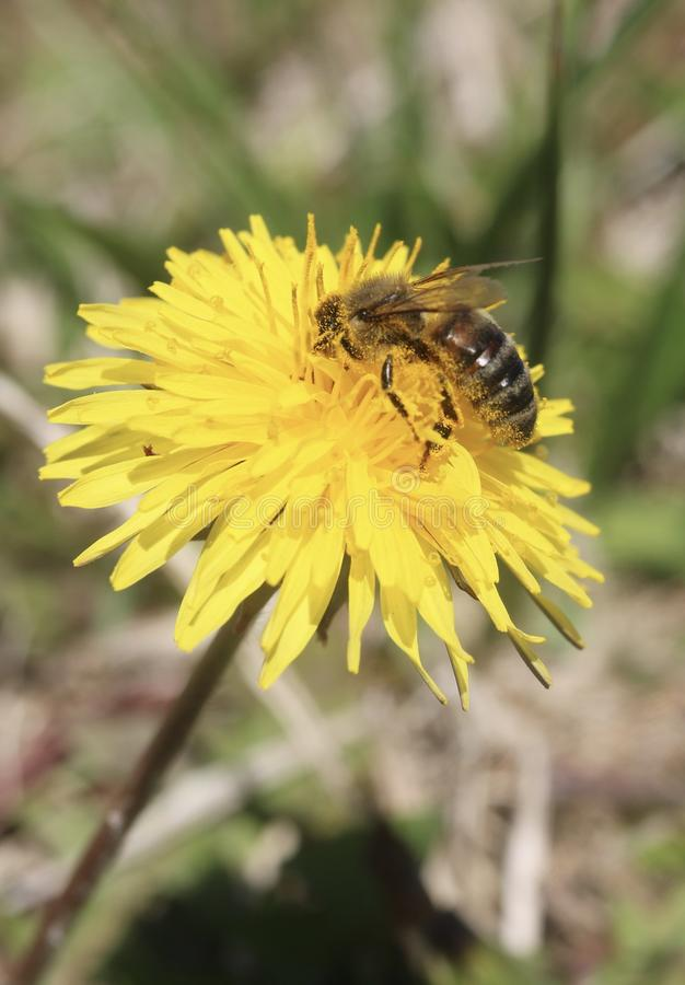 Locura del polen foto de archivo