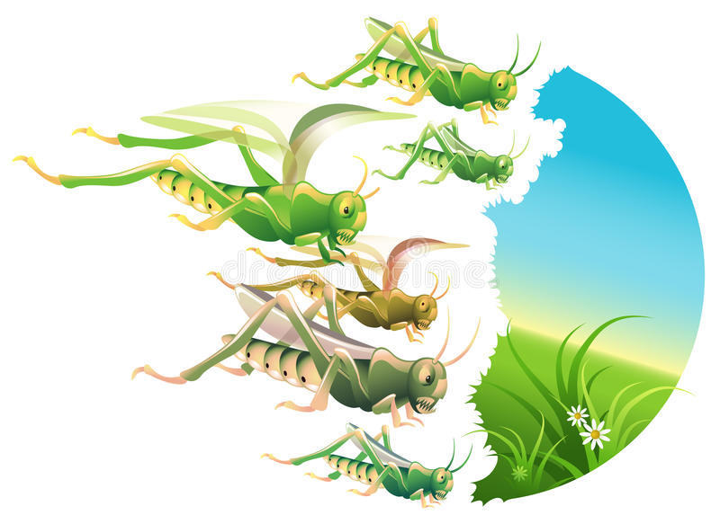 Locust Plague. Vector illustration of a locust swarm eating everything in their path vector illustration
