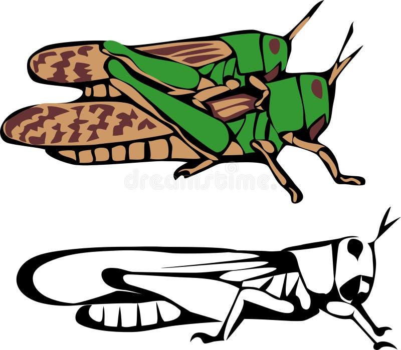Locusta migratore illustrazione di stock