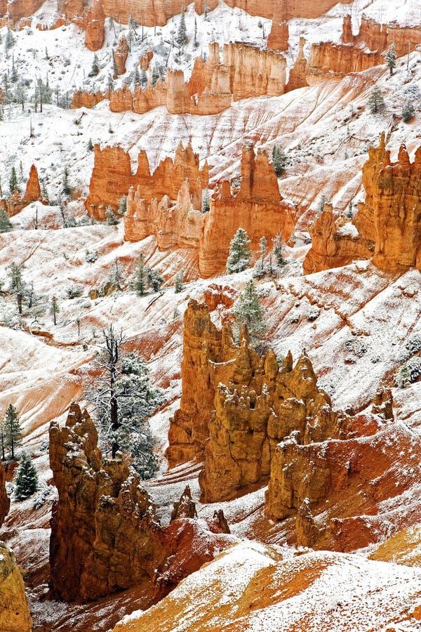 Lodlinje av Bryce Canyon National Park i vinter royaltyfria bilder