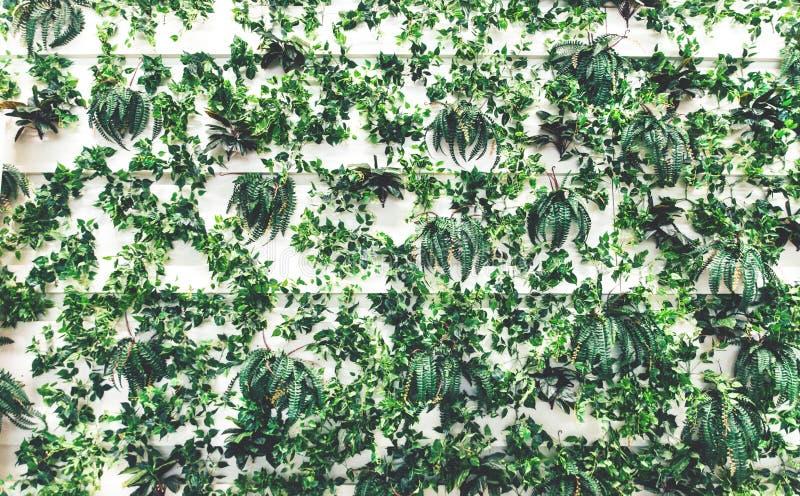 Lodlinjeträdgård med gröna växter på den royaltyfri fotografi