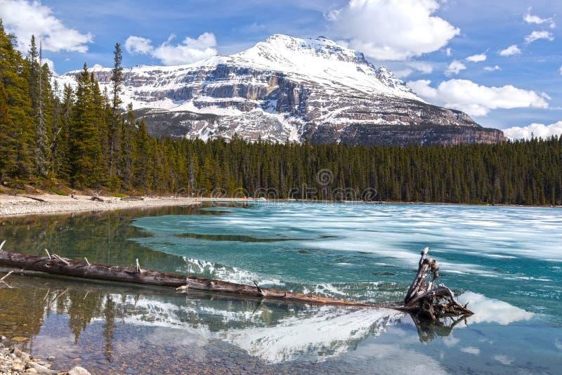 Lodowa błękita Jeziornego lodu Halnego szczytu Skalistych gór wiosny Banff Snowcapped Kanadyjski park narodowy zdjęcia royalty free