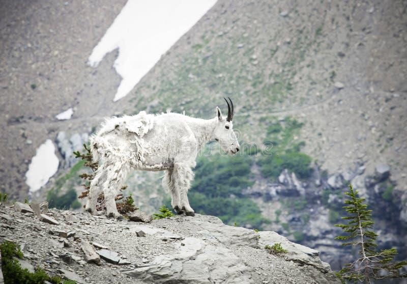 lodowa park narodowy koźli halny fotografia royalty free
