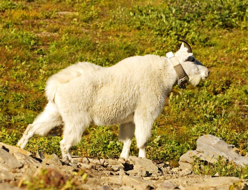 lodowa park narodowy koźli halny obraz royalty free