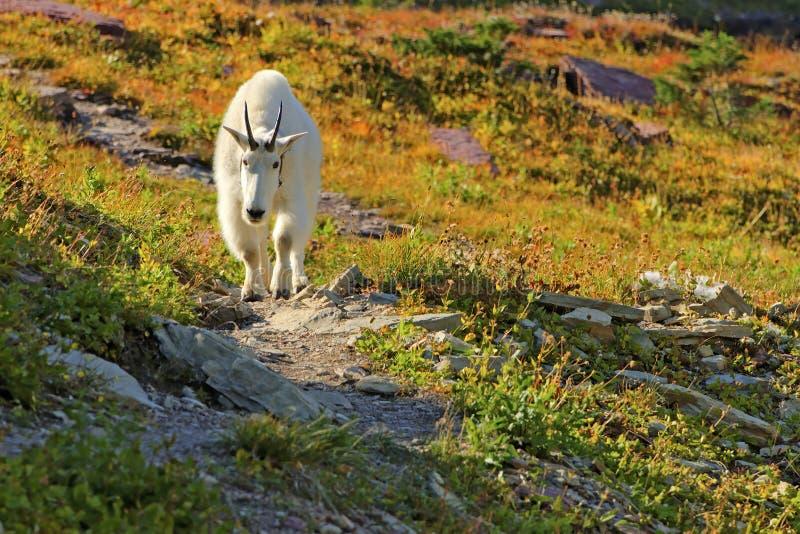 lodowa park narodowy koźli halny obraz stock
