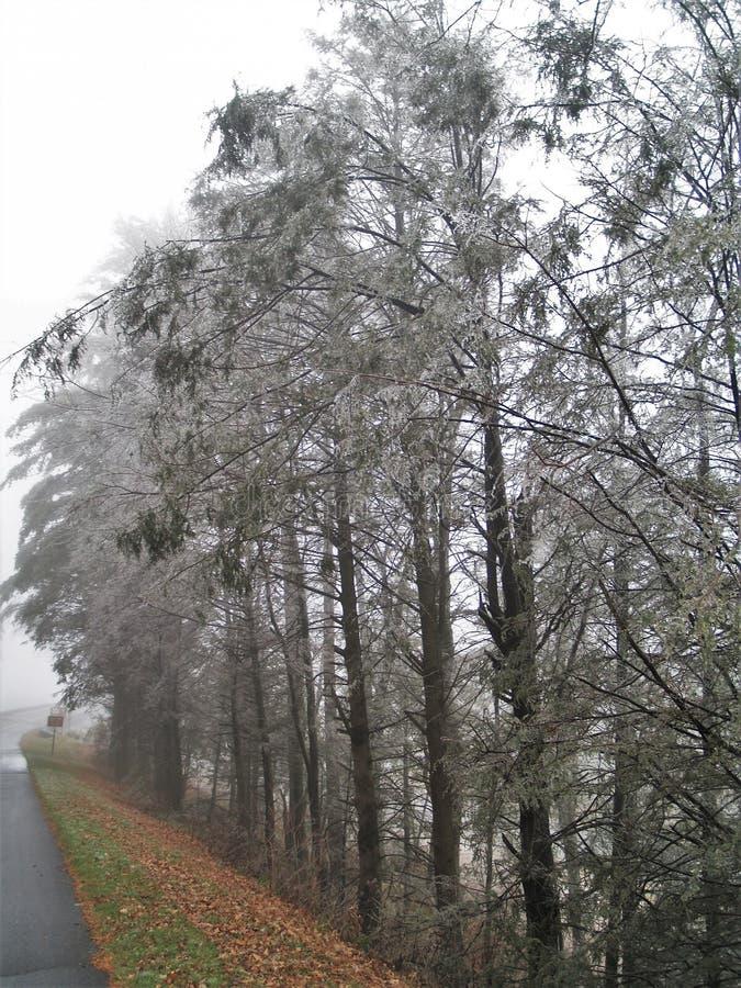 Lodowaci drzewa w Zachodnim Jefferson zdjęcia royalty free