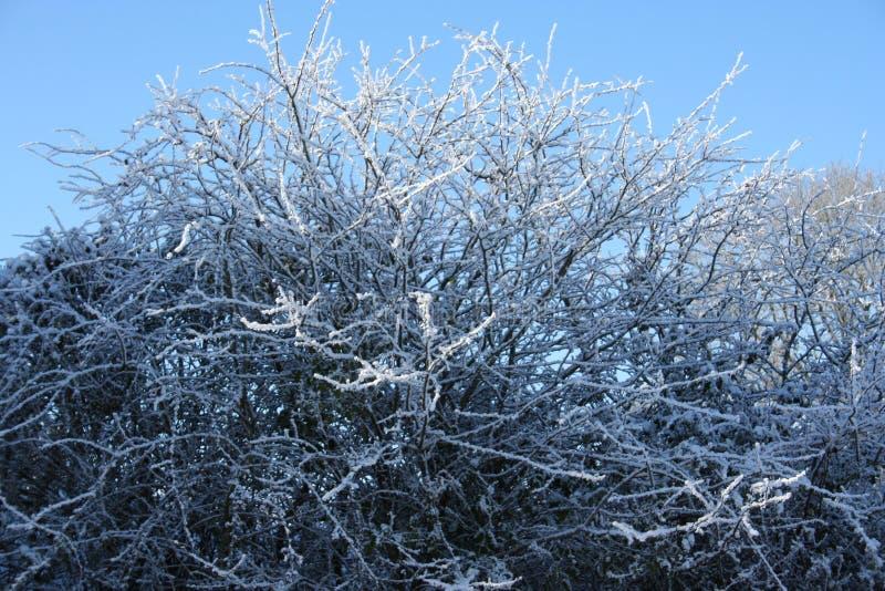 lodowaty drzewo obrazy stock