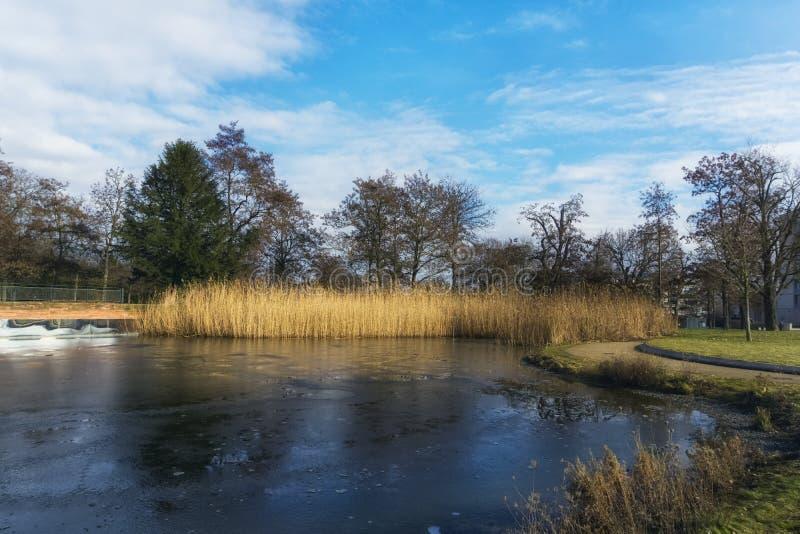 Lodowaty jezioro w jawnym parku obraz royalty free