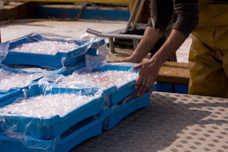 lodowe tace obrazy stock