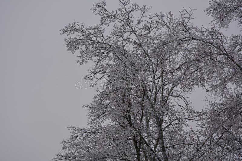 Lodowej burzy zimy śnieżnych drzew sopli zimny niebo fotografia royalty free