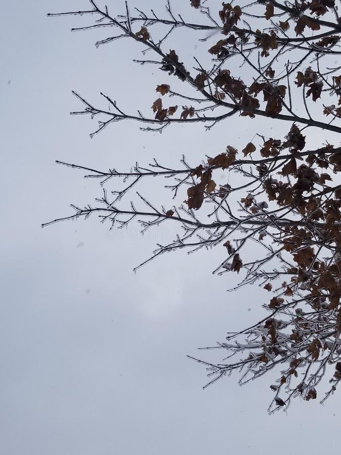 Lodowi drzewa zdjęcia royalty free