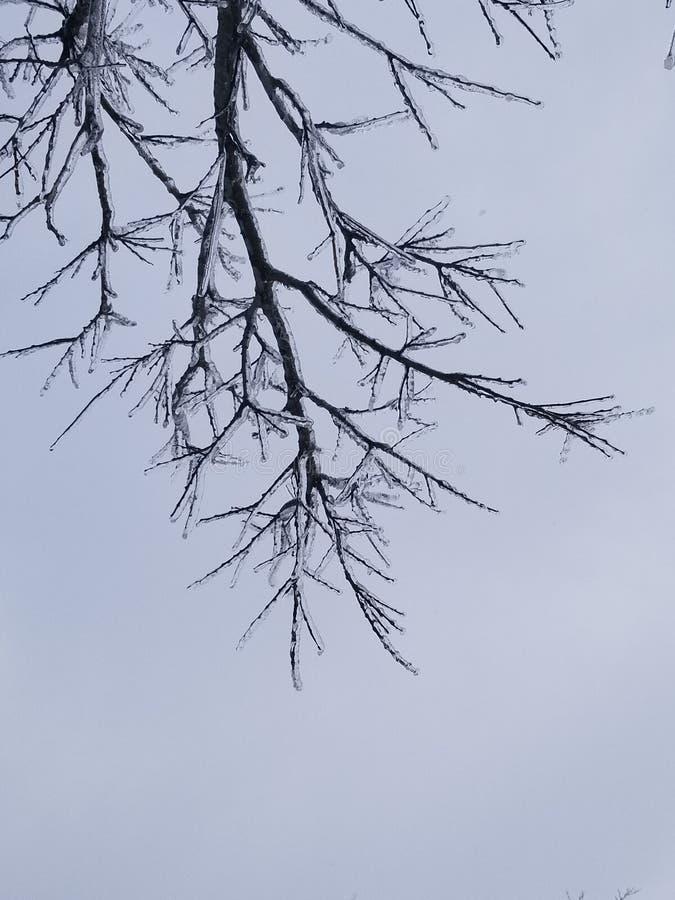 Lodowi drzewa obraz royalty free