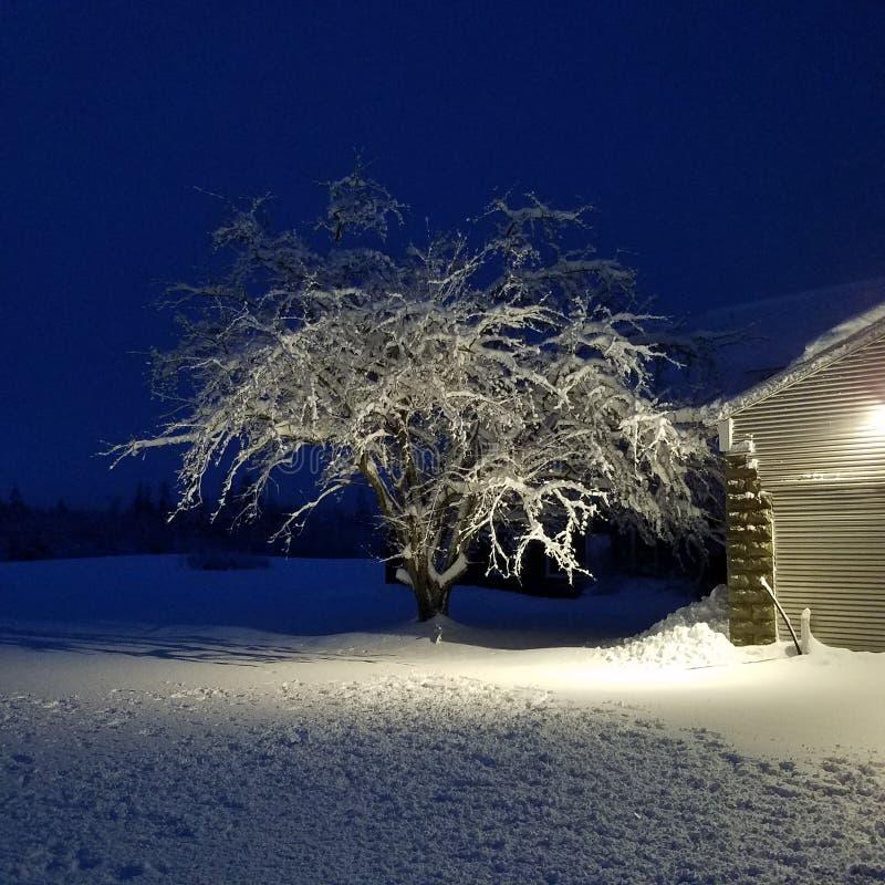 Lodowy drzewo w wieczór zdjęcie royalty free