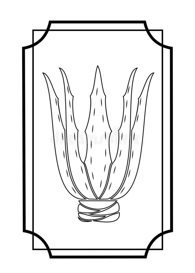 ?loe vera Planta medicinal en medicina Imagen gr?fica Afici?n agradable y modesta para los colectores de cactus Cuadro en marco stock de ilustración