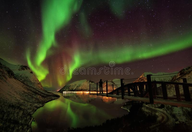 Lofoten-Insel-Nordlichter Aurora Borealis Norway lizenzfreie stockfotos