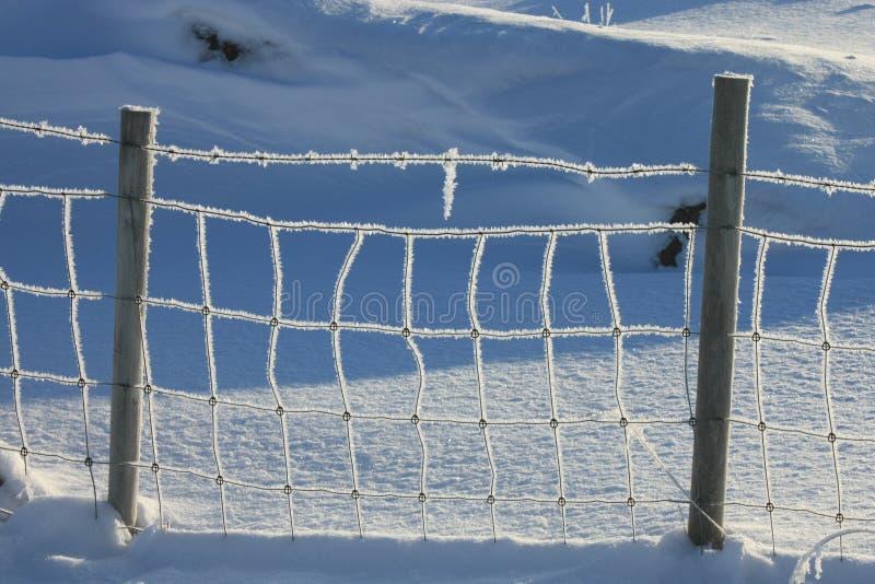 Lofoten's frozen wire. A frozen wire in a field of Lofoten islands stock photography