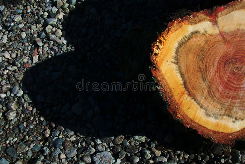 Download Log stock photo. Image of brick, tree, branch, sawn, stone - 198630