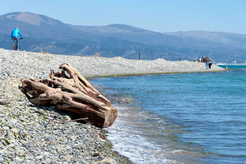 Log by the sea. Log by the Blac sea royalty free stock images